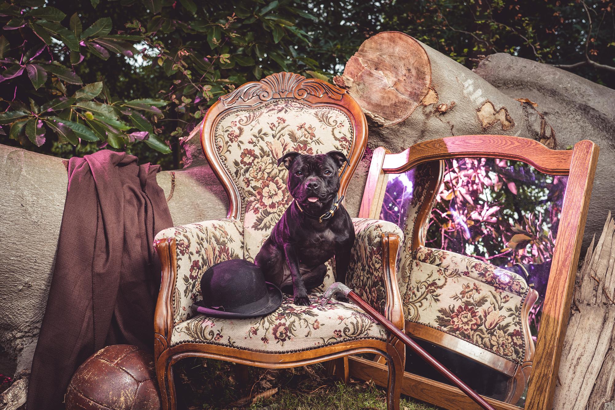cover jonge honden dag geraardsbergen