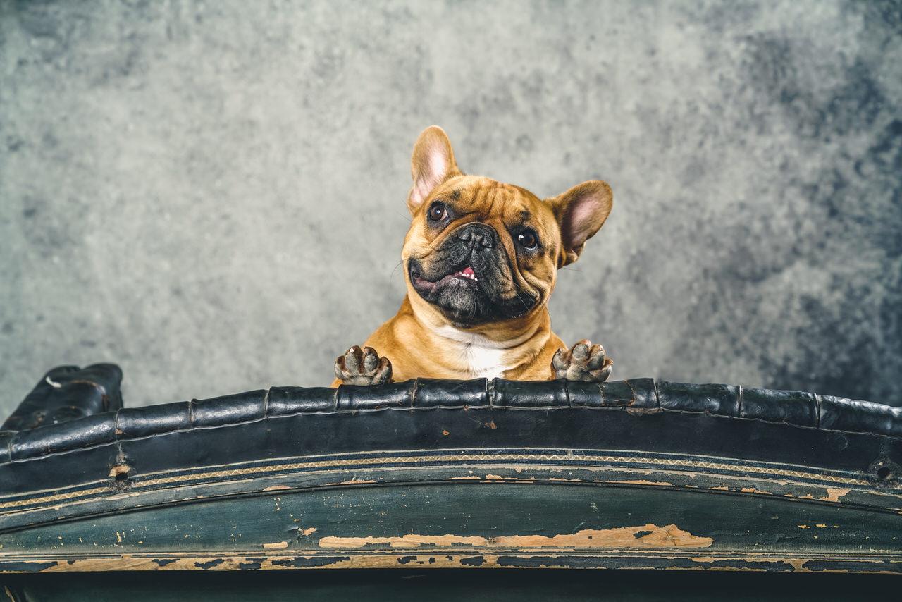 Dogshow luxexpo