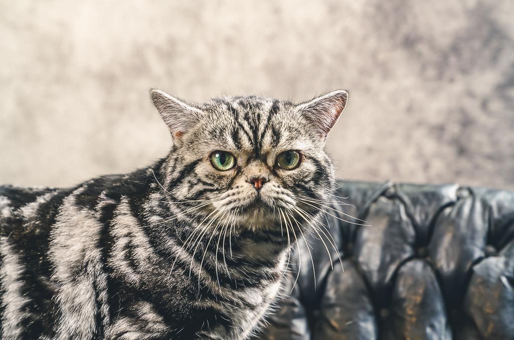 cat show grumpy cat