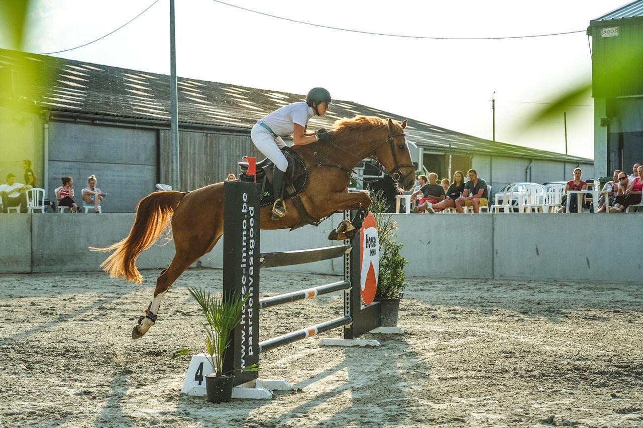 mivaro jumping horse immo