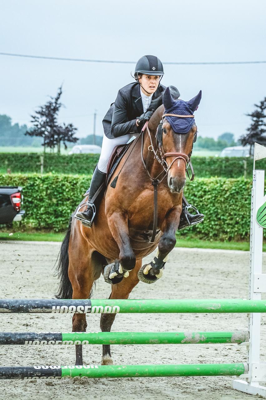 horse immo mivaro jumping horseman
