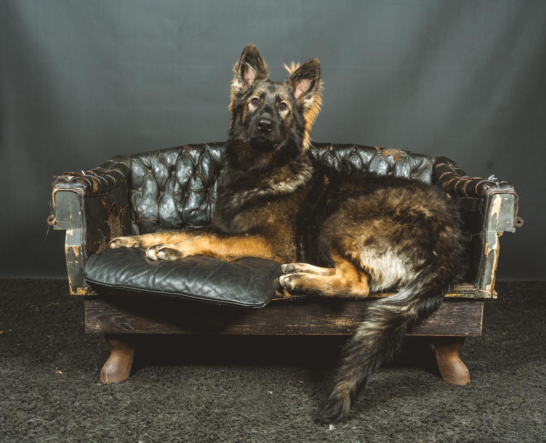 lovanium leuven dog show