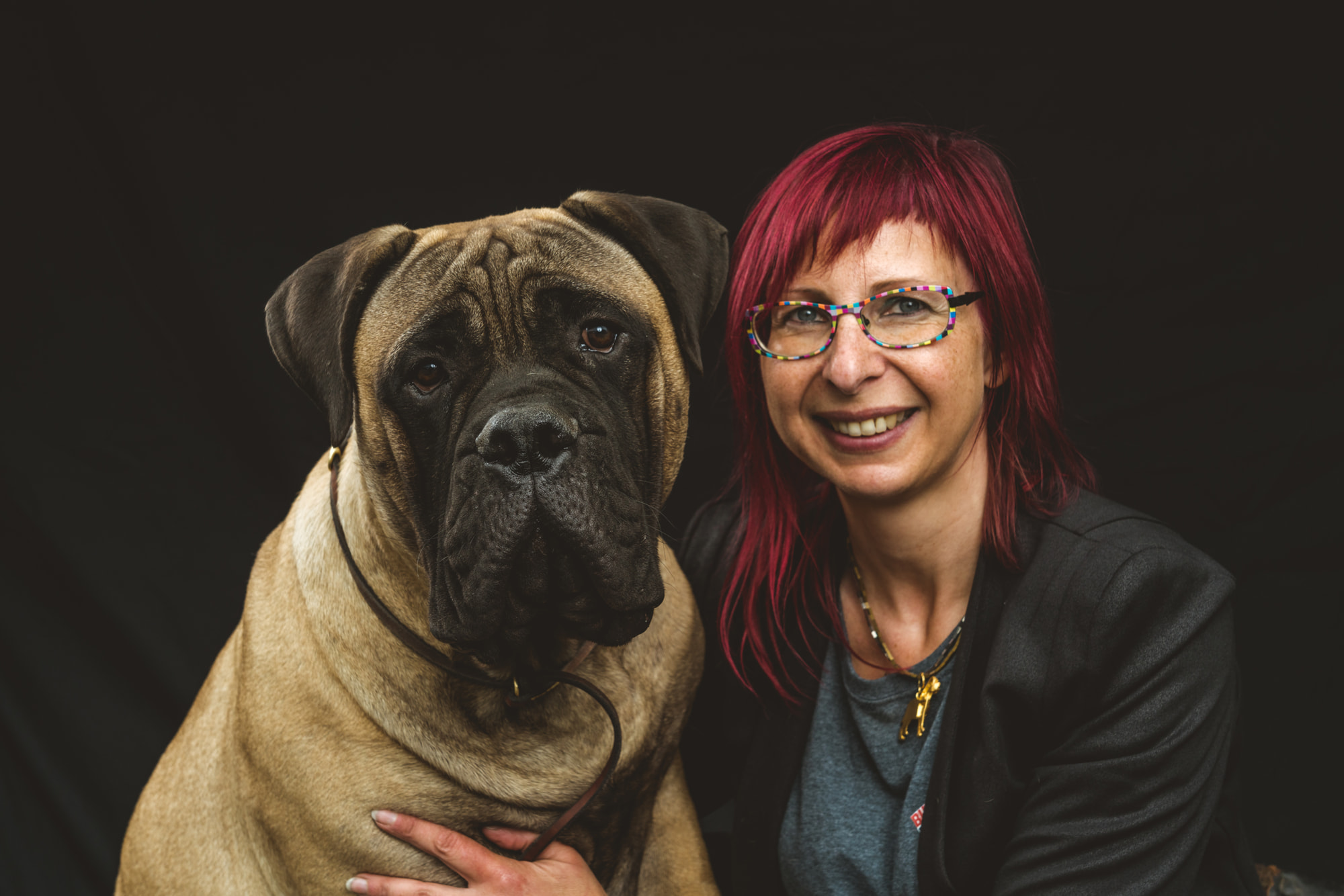 bullmastiff fotoshoot