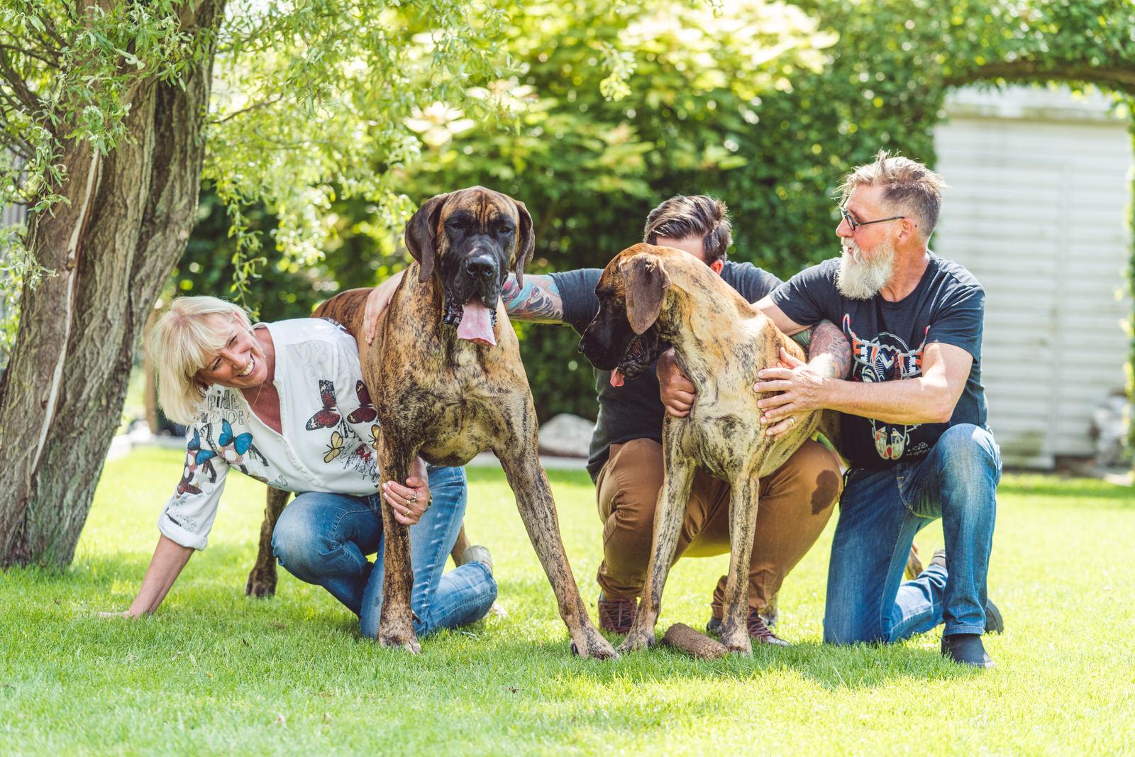 fotoshoot honden
