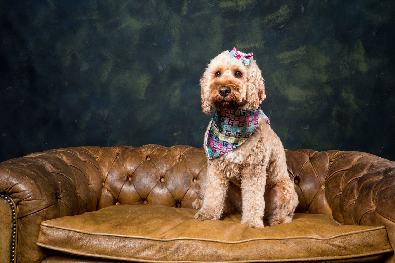 studioportret hond