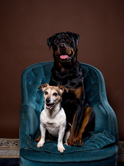 Jack russell en rottweiler in sofa