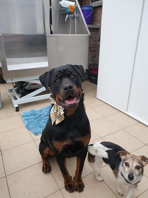 foto hond met gsm