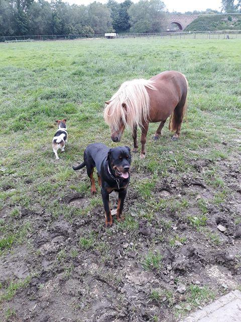 hond met paard