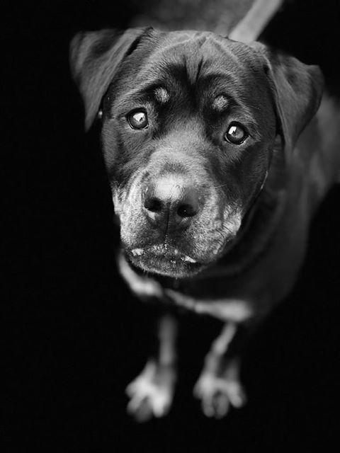 portret hond zwart wit