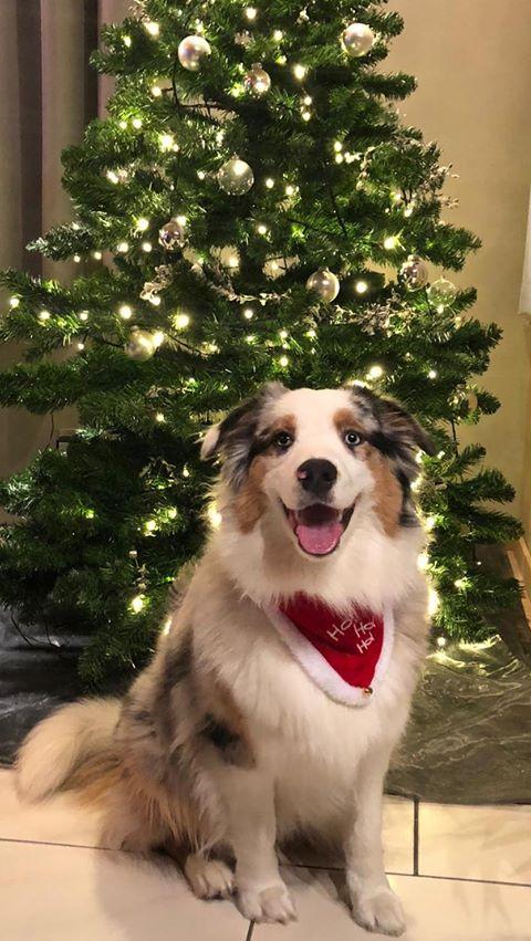 hond met kerstboom