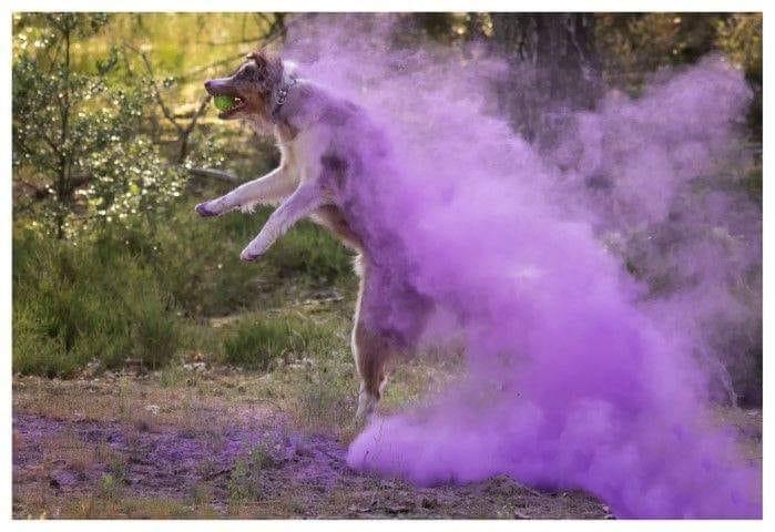 paarse rookbom shoot hond