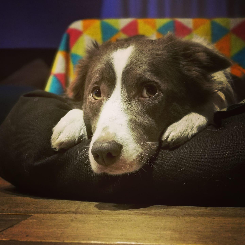 hond in de zetel