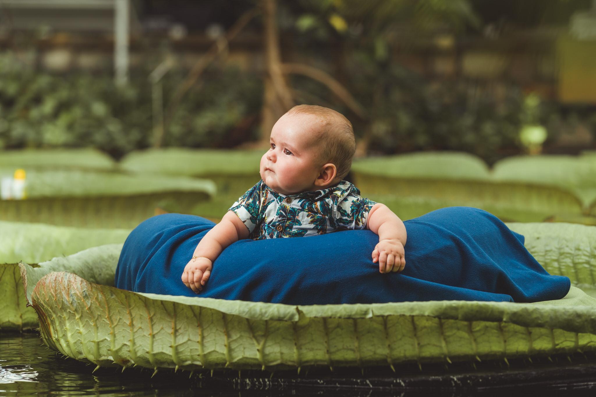 Plantentuin waterlelie baby's 1